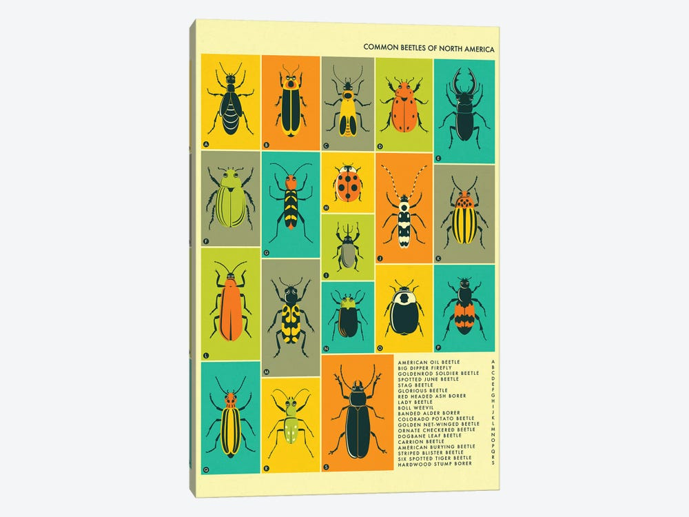 Common Beetles Of North America by Jazzberry Blue 1-piece Canvas Artwork