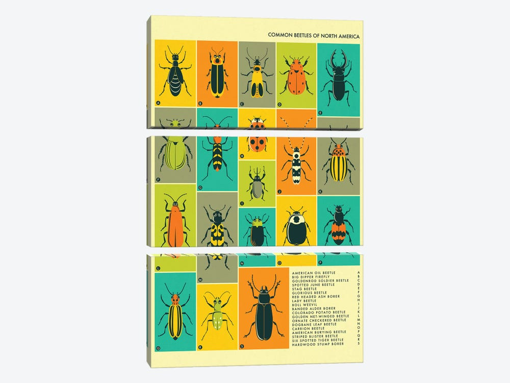 Common Beetles Of North America by Jazzberry Blue 3-piece Canvas Artwork