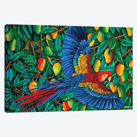 Macaw In Mango Tree Canvas Print #JBT41} by Daniel Jean-Baptiste Art Print