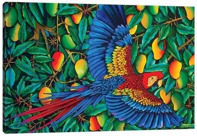 Macaw In Mango Tree Canvas Art Print