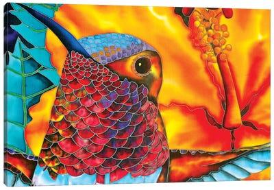Rufous Hummingbird Canvas Art Print