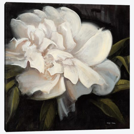 Flower I Canvas Print #JCA19} by Joseph Cates Canvas Artwork