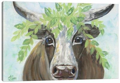 Steer Bedecked Canvas Art Print