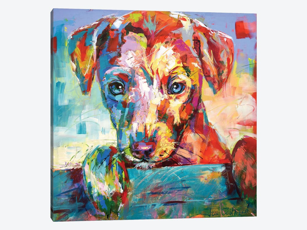 Jack Russell Puppy Looking Over Fence by Jos Coufreur 1-piece Canvas Print