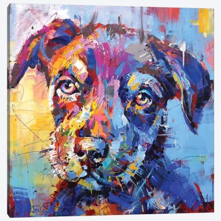 Kelpie Canvas Print #JCF104} by Jos Coufreur Canvas Art Print