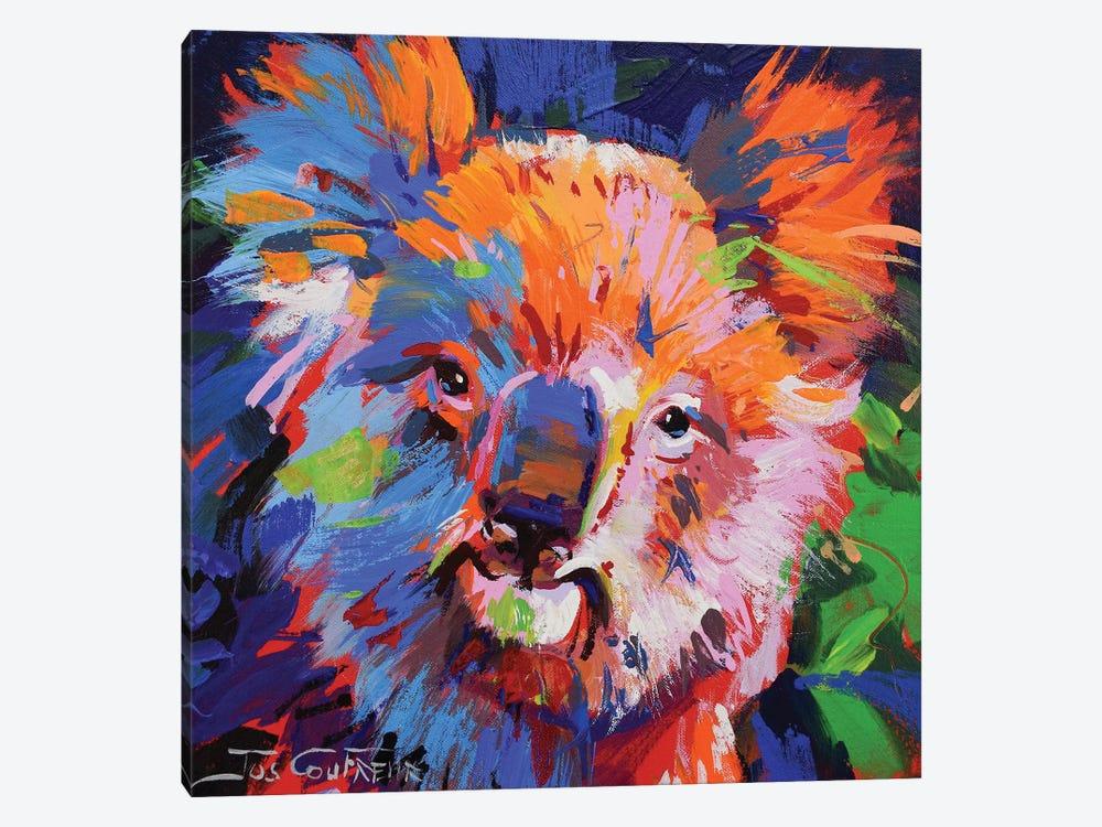 Koala IX by Jos Coufreur 1-piece Art Print