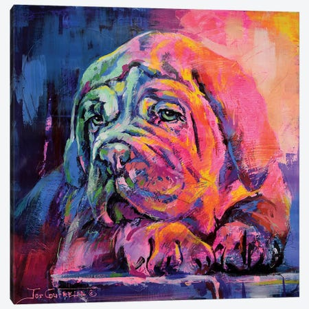 Bull Mastiff Puppy Canvas Print #JCF116} by Jos Coufreur Canvas Artwork