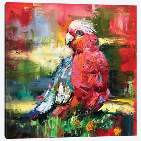 Galah Canvas Print #JCF144} by Jos Coufreur Canvas Art Print