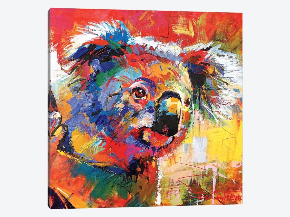 Koala XI by Jos Coufreur 1-piece Canvas Art