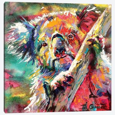 Curious Koala Canvas Print #JCF153} by Jos Coufreur Canvas Art Print