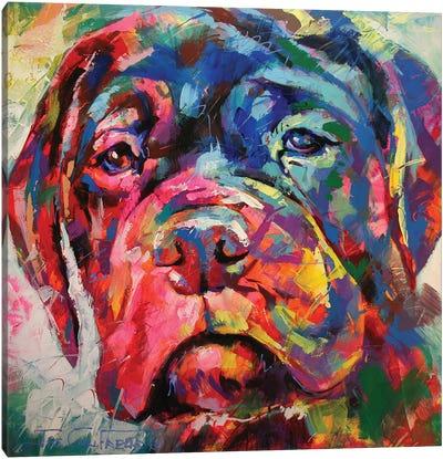 Bull Mastiff Puppy Canvas Art Print