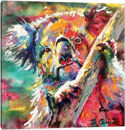 Koala In Tree Canvas Art Print
