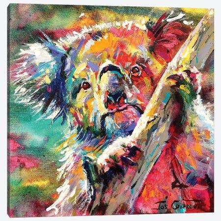 Koala In Tree Canvas Print #JCF165} by Jos Coufreur Art Print