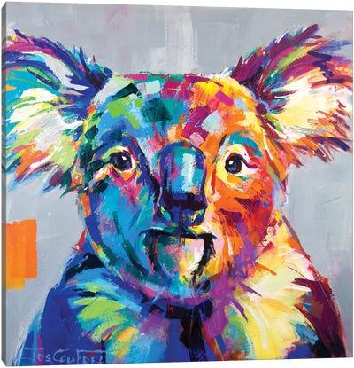 Koala I Canvas Art Print