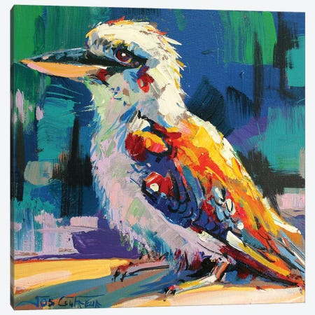 Kookaburra V Canvas Print #JCF44} by Jos Coufreur Canvas Print