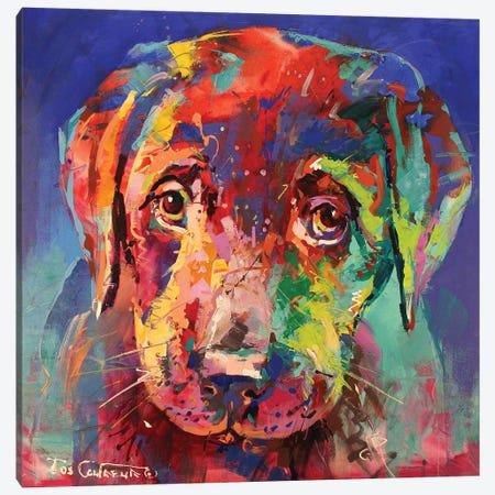 Labrador Puppy II Canvas Print #JCF47} by Jos Coufreur Canvas Art Print