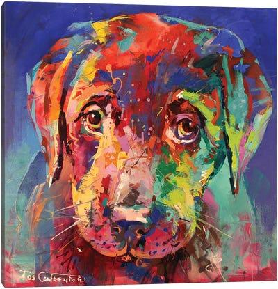 Labrador Puppy II Canvas Art Print