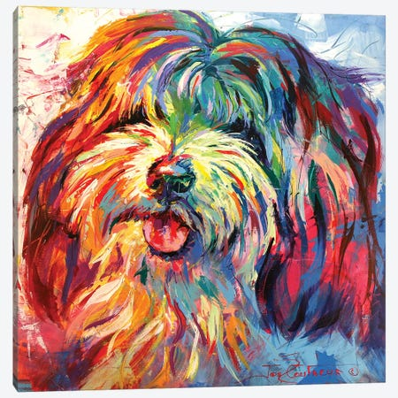 Lhaso Apso Canvas Print #JCF48} by Jos Coufreur Canvas Art