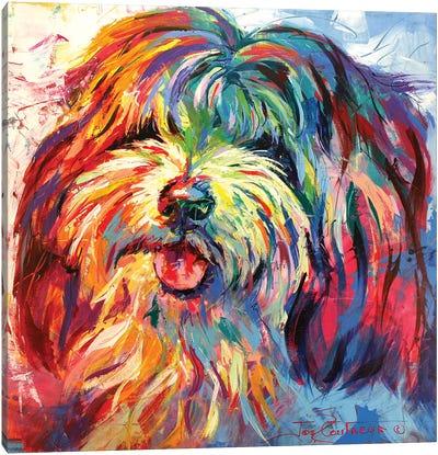 Lhaso Apso Canvas Art Print