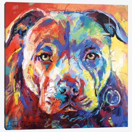 Staffordshire Bull Terrier Canvas Print #JCF77} by Jos Coufreur Canvas Art