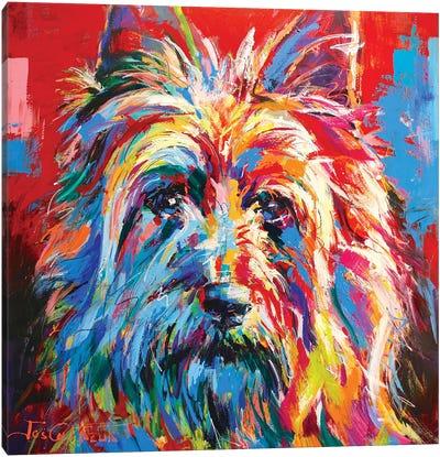 Australian Silky Terrier Canvas Art Print