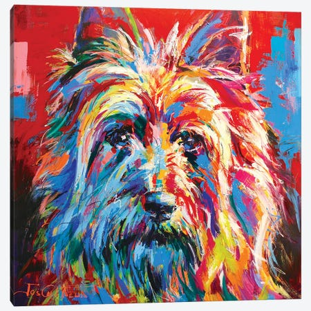 Australian Silky Terrier Canvas Print #JCF90} by Jos Coufreur Art Print