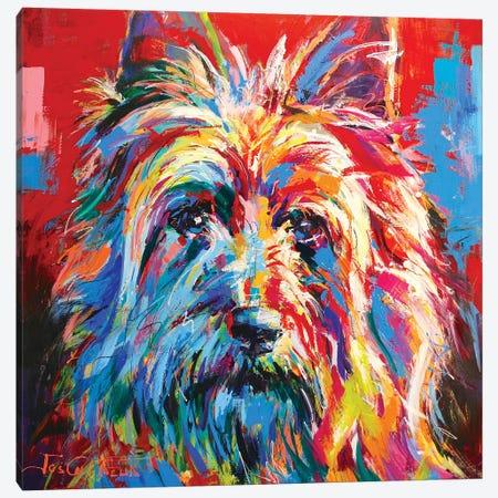 Australian Silky Terrier Canvas Print #JCF90} by Jos Coufreur Art Print