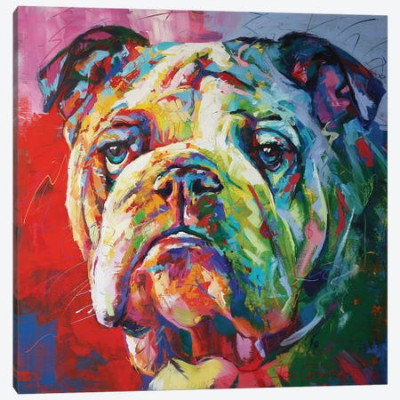 Bulldog Canvas Print #JCF93} by Jos Coufreur Canvas Print