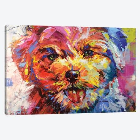 Bichon Frisé Canvas Print #JCF96} by Jos Coufreur Canvas Wall Art