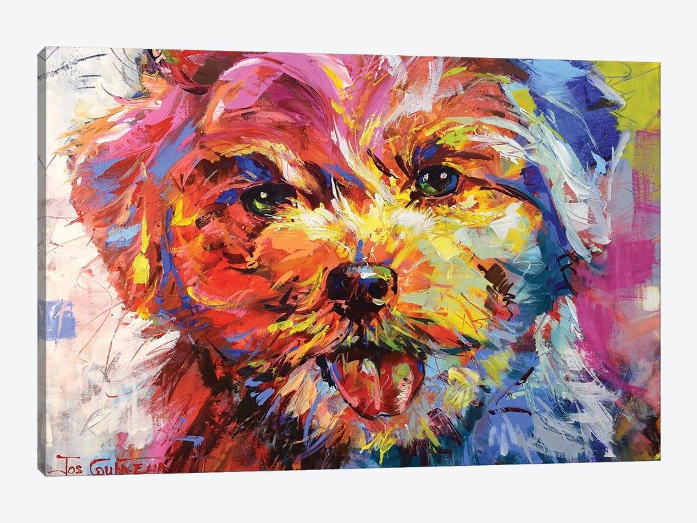 Bichon Frisé by Jos Coufreur 1-piece Canvas Artwork