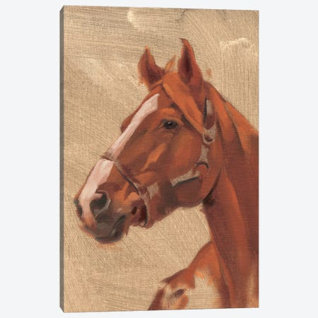 Thoroughbred I Canvas Print #JCG104} by Jacob Green Canvas Artwork