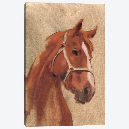Thoroughbred II Canvas Print #JCG105} by Jacob Green Canvas Wall Art