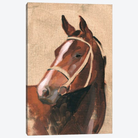 Thoroughbred III Canvas Print #JCG106} by Jacob Green Canvas Artwork