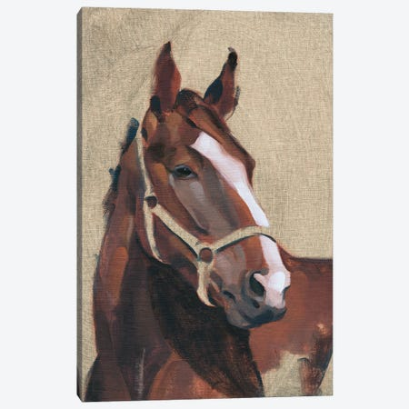 Thoroughbred IV Canvas Print #JCG107} by Jacob Green Canvas Art