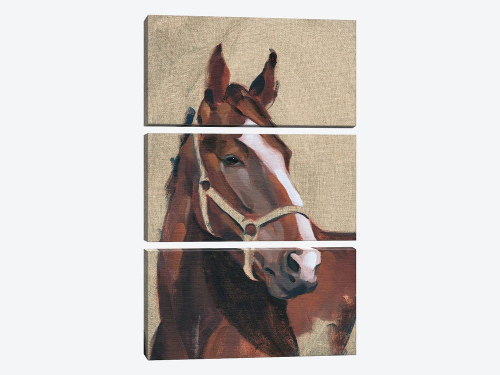 Thoroughbred IV by Jacob Green 3-piece Canvas Art Print