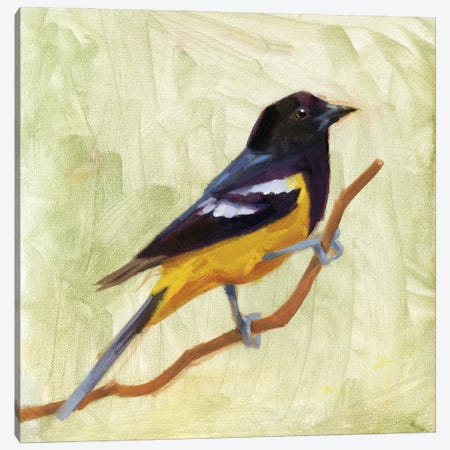 Backyard Birds I Canvas Print #JCG114} by Jacob Green Art Print