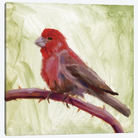 Backyard Birds II Canvas Print #JCG115} by Jacob Green Canvas Print