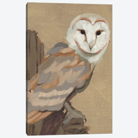 Common Barn Owl Portrait I Canvas Print #JCG122} by Jacob Green Canvas Art Print