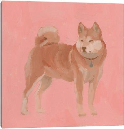 Shiba Inu I Canvas Art Print