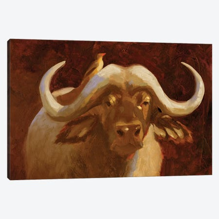 Cape Buffalo I Canvas Print #JCG31} by Jacob Green Canvas Art