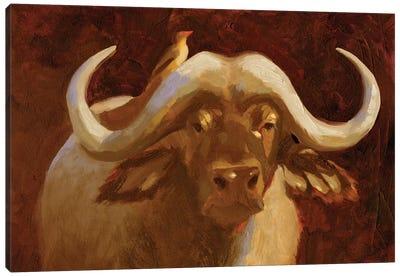 Cape Buffalo I Canvas Art Print