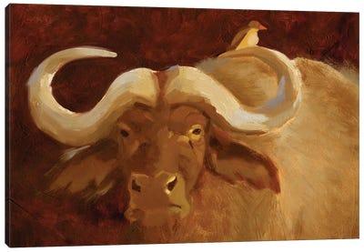 Cape Buffalo II Canvas Art Print