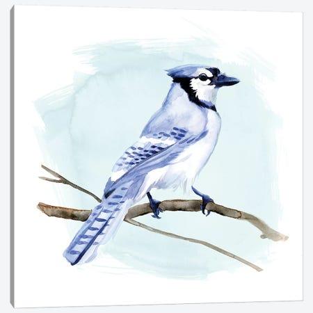 Coastal Blue Jay I Canvas Print #JCG35} by Jacob Green Art Print