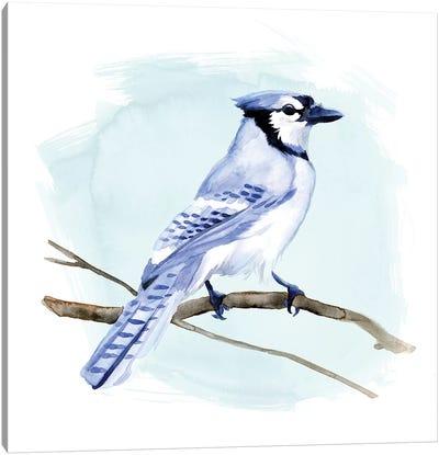 Coastal Blue Jay I Canvas Art Print