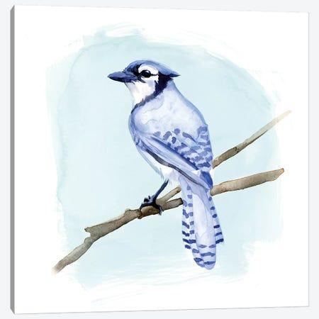 Coastal Blue Jay II Canvas Print #JCG36} by Jacob Green Art Print