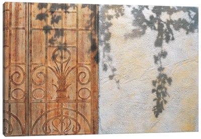 Rusty Door And Grapevine Canvas Art Print