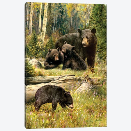 Black Bear Family Canvas Print #JCL1} by Greg & Company Canvas Wall Art