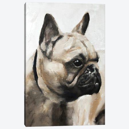 Serious Pug Canvas Print #JCT112} by James Coates Canvas Print