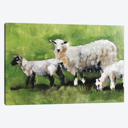 Three Little Sheep Canvas Print #JCT130} by James Coates Art Print