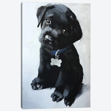 Black Labrador Puppy Canvas Print #JCT21} by James Coates Canvas Wall Art